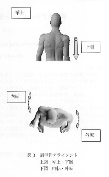 肩甲骨アライメントと頚部筋群との関係についての表紙