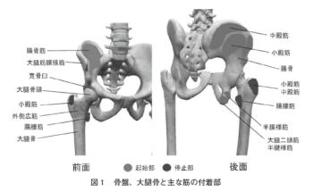 股関節マイクロ牽引が股関節外転力に及ぼす影響の表紙